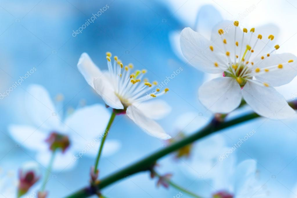 Frühling blühende weiße Frühlingsblumen — Stockfoto © dovapi #98583192