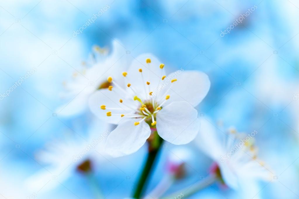 Frühling blühende weiße Frühlingsblumen — Stockfoto © dovapi #98583668