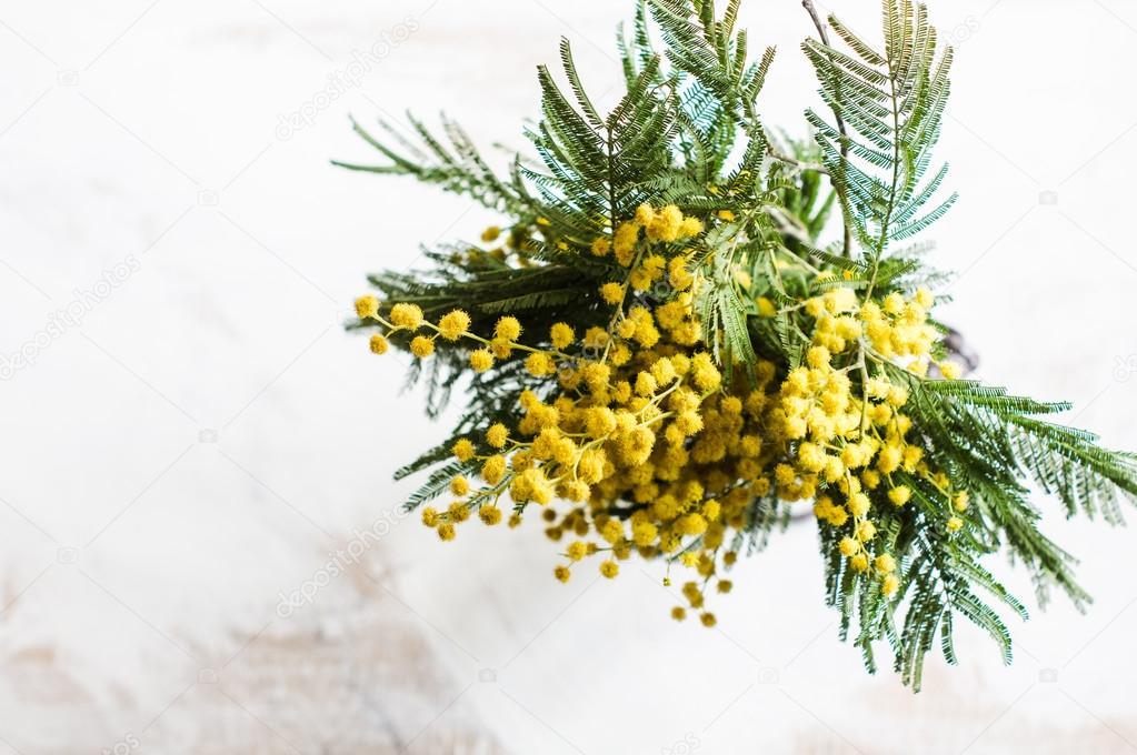 Цветы золотая розга фото