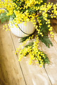 Fotografie spring time, yellow mimosa flowers