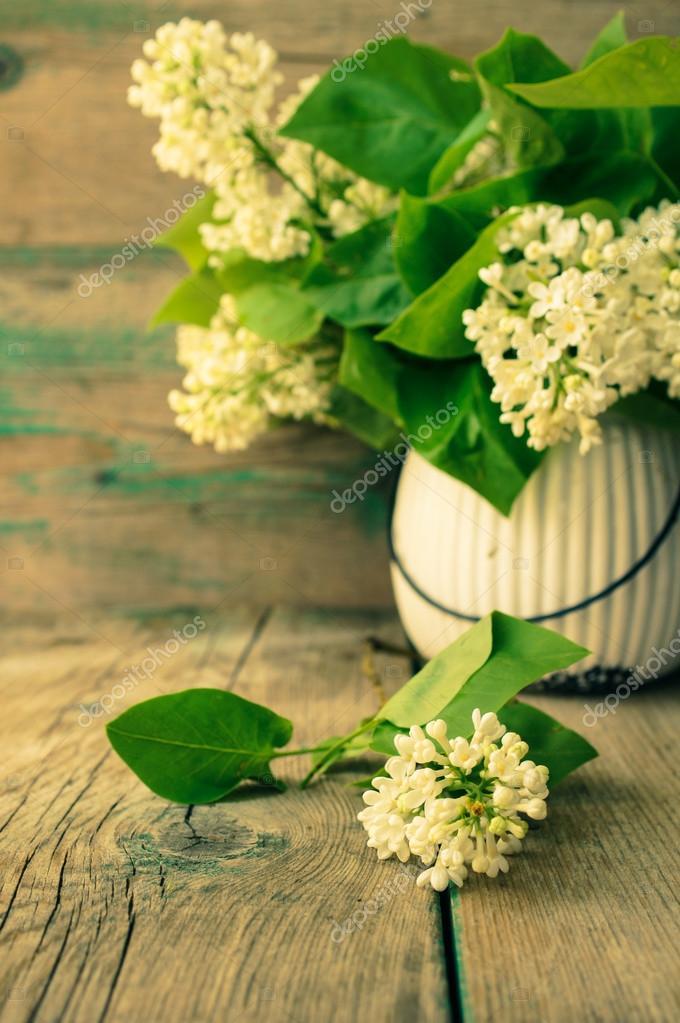 weiß lila blumen — Stockfoto © Elet_1 #72906921
