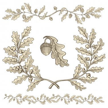Hand drawn beige oak wreath and branch dividers with acorns with woodcut shading isolated on white background. stock vector