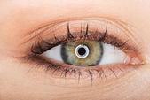 Makrobild des weiblichen Auges