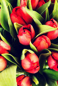 čerstvý jarní Tulipán květy.