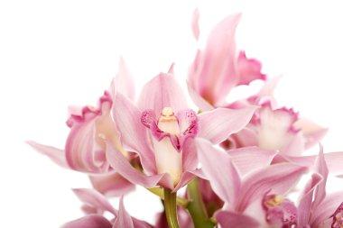 Beautiful fresh lily bouquet.