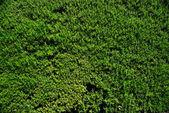 zelený mech textury