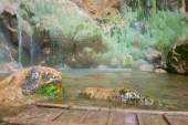 Fotografie beautiful secene on waterfall