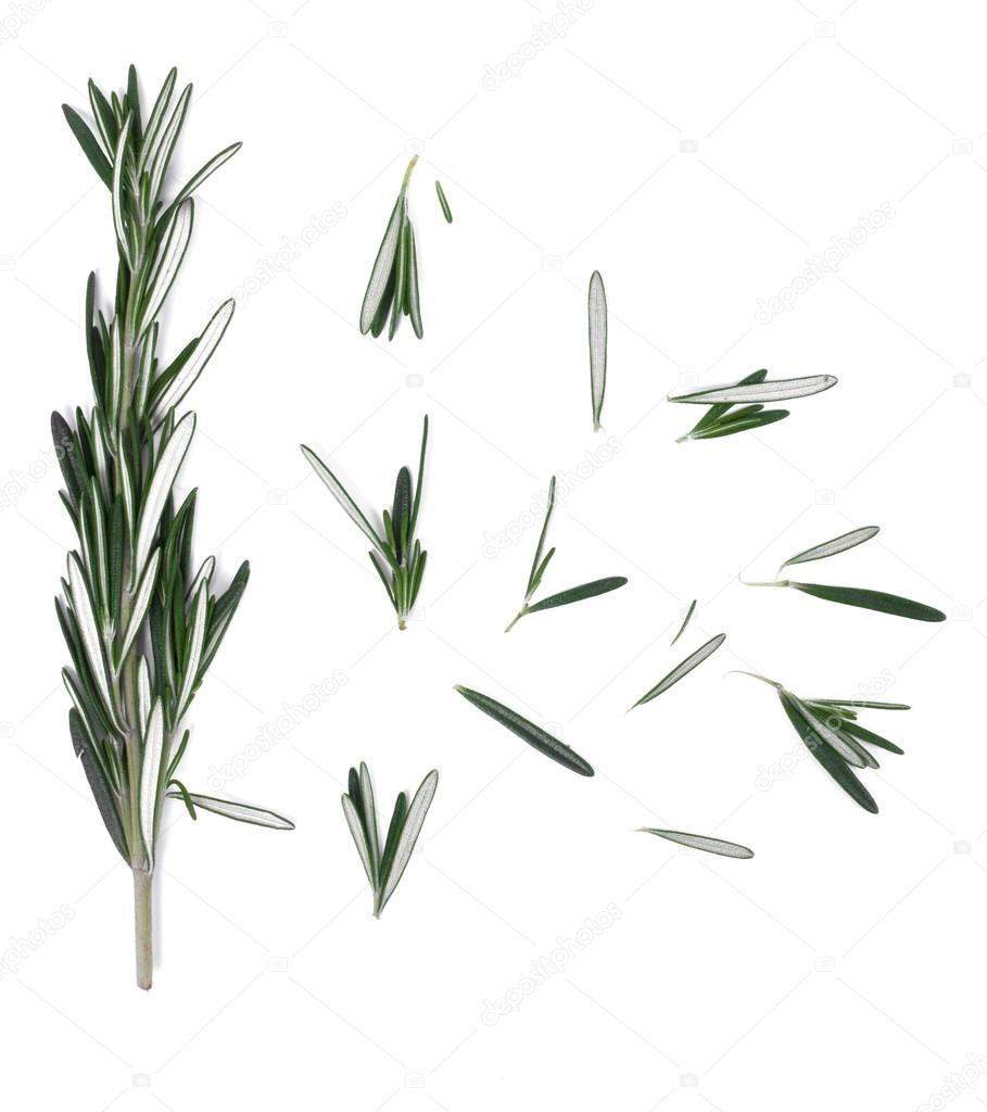 Rosemary on a white