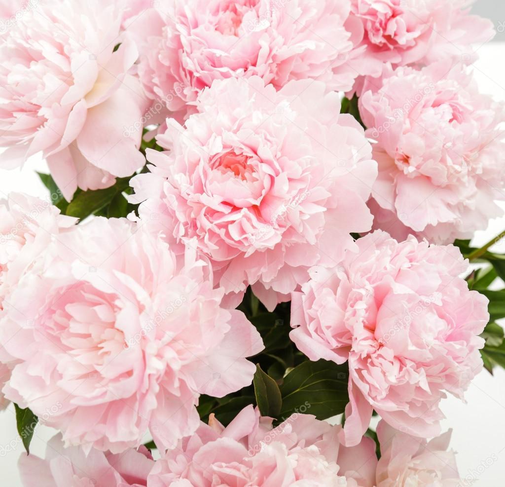Цветы пионы красивые