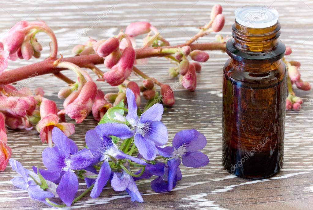 Fleurs De Bach De Chataignier Rouge Et Violettes Photographie