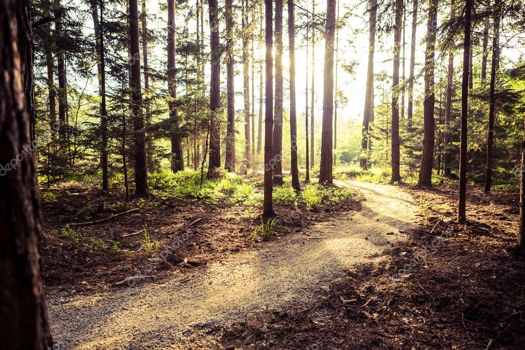 Hiking path and sunset in beautiful woods