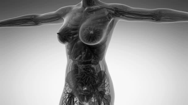 vědy anatomie lidského těla v x-ray se všemi orgány