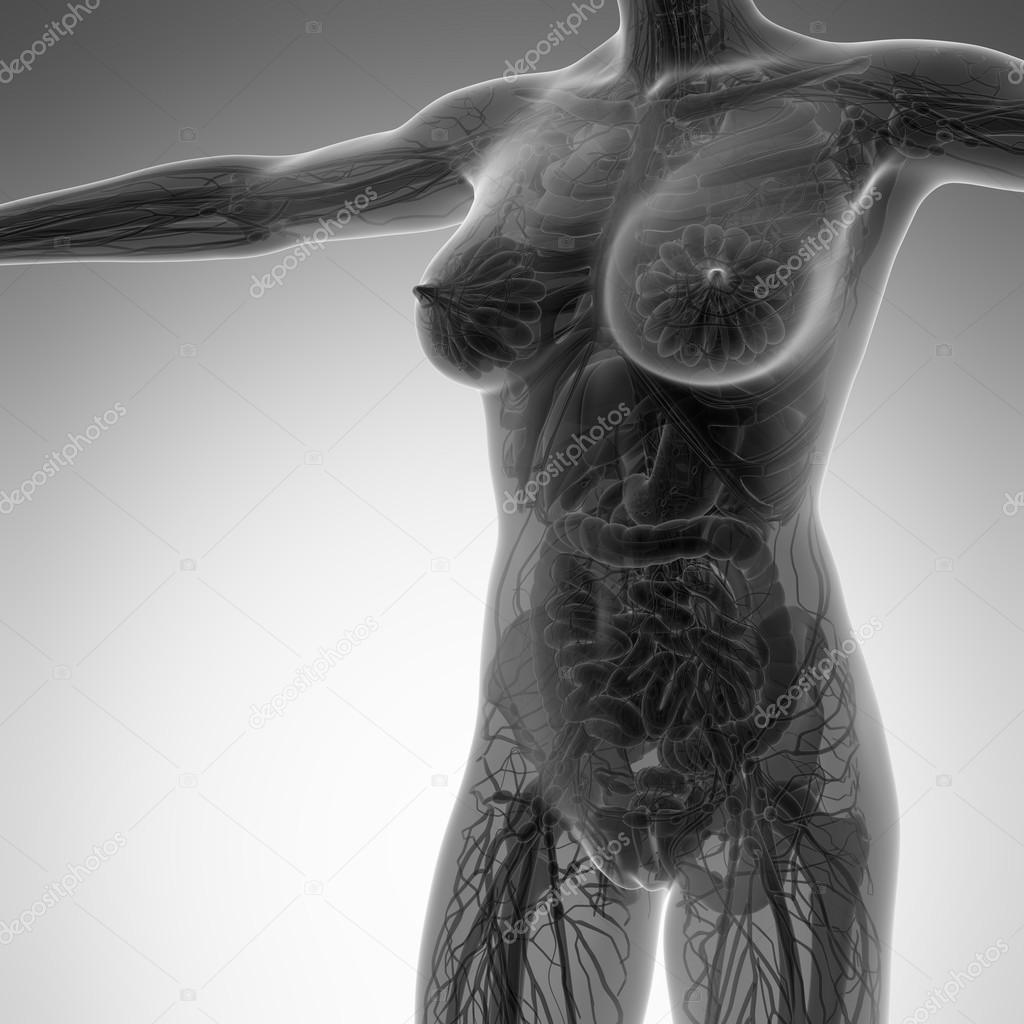 Anatomía de la ciencia del cuerpo humano en rayos x con todos los ...