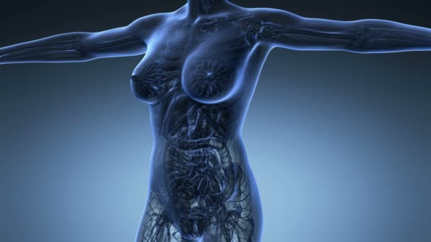 science anatomy of human body in x-ray with all organs on blue background