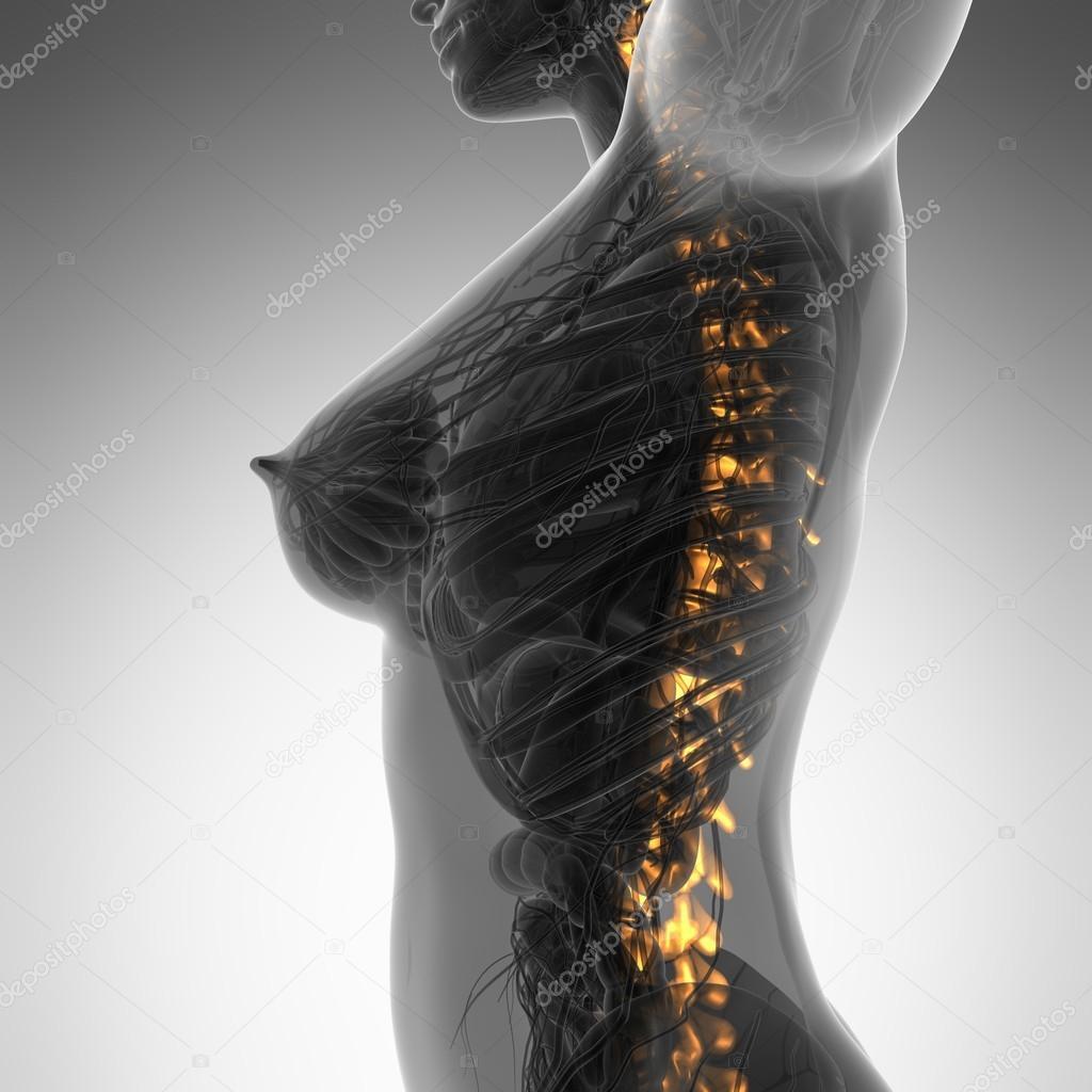 Menschliche Rückenschmerzen, Rückenschmerzen mit einem oberen Rumpf ...