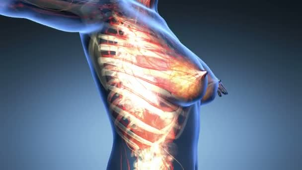 smyčky vědy anatomie lidského těla v x-ray s všechny barevné orgány