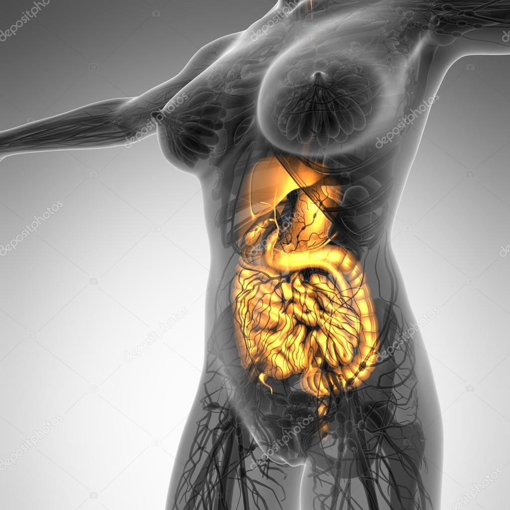 science anatomy of woman body with glow digestive system — Stock ...
