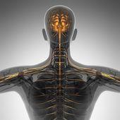 vědy anatomie lidského mozku v x-ray
