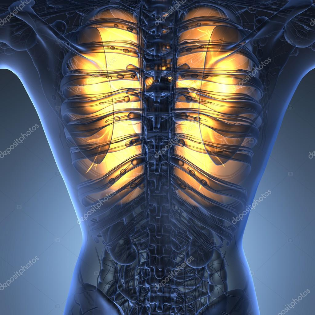 science anatomy of woman body with glow lungs — Stock Photo ...