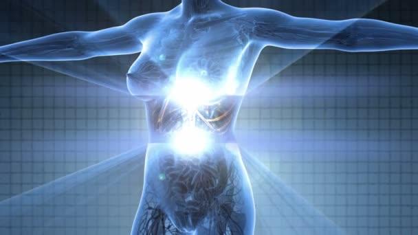 Wissenschaft-Anatomie-Scan des menschlichen Körpers im Röntgen mit ...