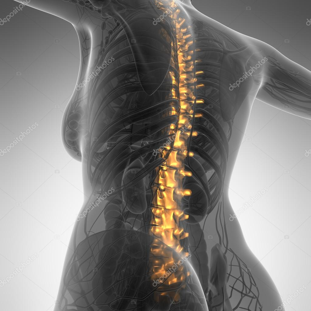 Human backache and back pain with an upper torso body skeleton s ...
