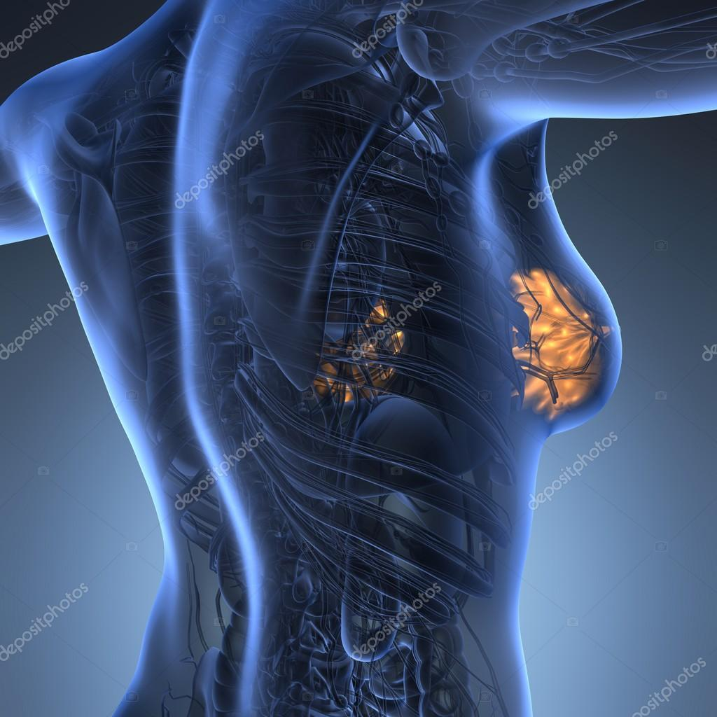 Wissenschaft-Anatomie des menschlichen Körpers mit glühen Brustdrüse ...