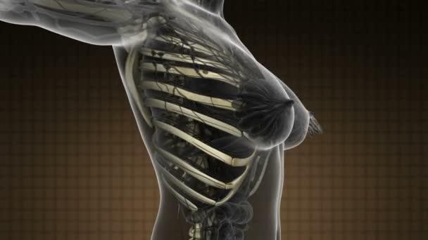 science anatomy scan of human body with skeletal bones
