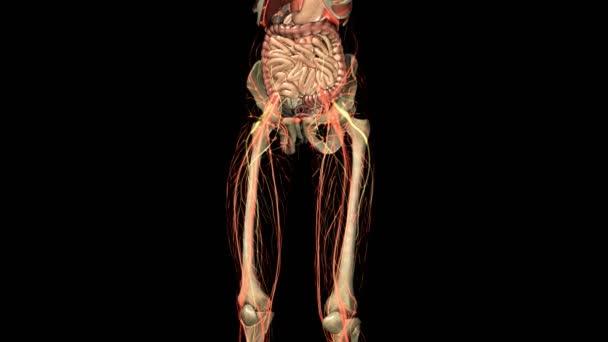 skenování věda anatomie lidského těla orgánů a kostí