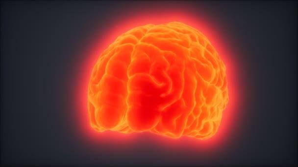 Animace otáčejícího se lidského mozku