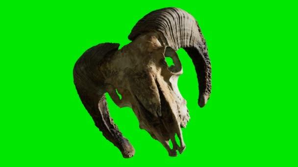 ram skull at green chromakey background