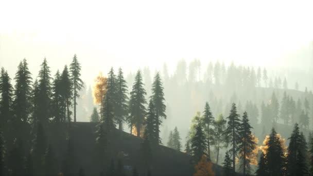 Sluneční světlo ve smrkovém lese v mlze na pozadí hor při západu slunce