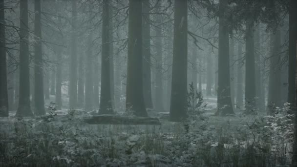 téli hófödte erdő egy felhős napon