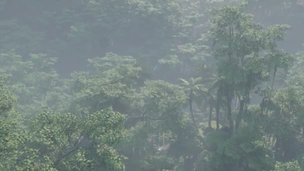 Mlha pokryla krajinu deštných pralesů
