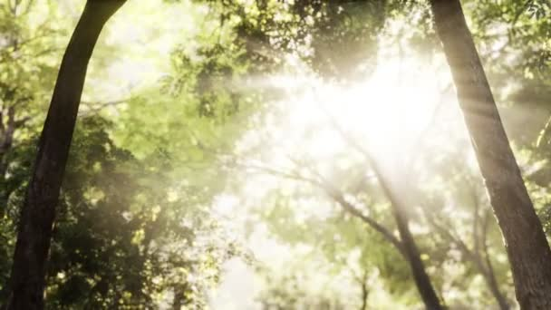 Rays of bursting sunlight in a misty forest
