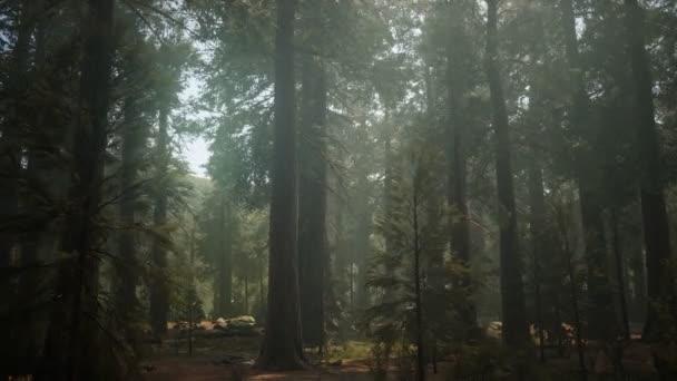 Naplemente az Óriáserdőben, Sequoia Nemzeti Park, Kalifornia