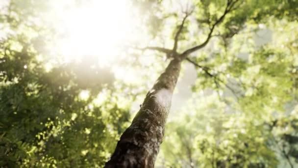 Paprsky praskajícího slunečního světla v zamlženém lese
