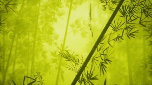 asijský bambusový les s ranní mlhou
