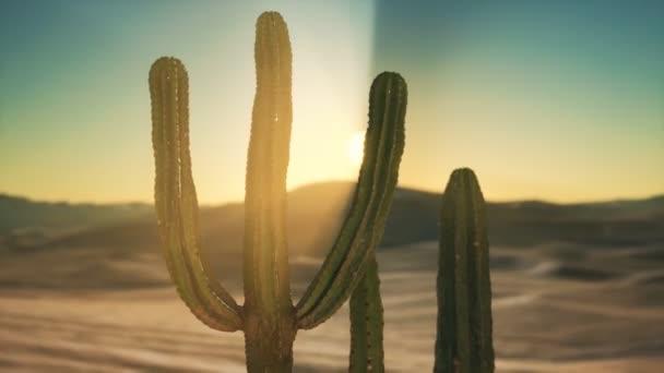 Saguaro Kaktusz a Sonoran sivatagban Arizonában