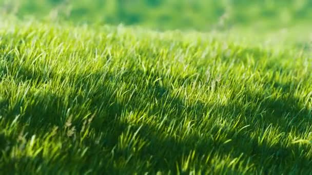 8K green grass field on hills background