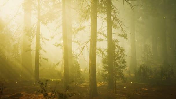Fantasy szentjánosbogár fények a varázslatos erdőben