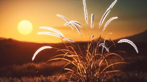 divoké květiny na kopcích při západu slunce