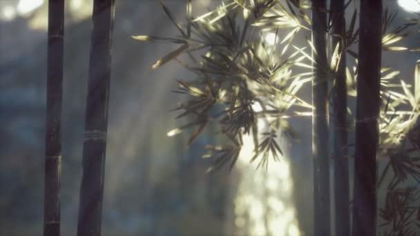 Ázsiai bambuszerdő napfénnyel