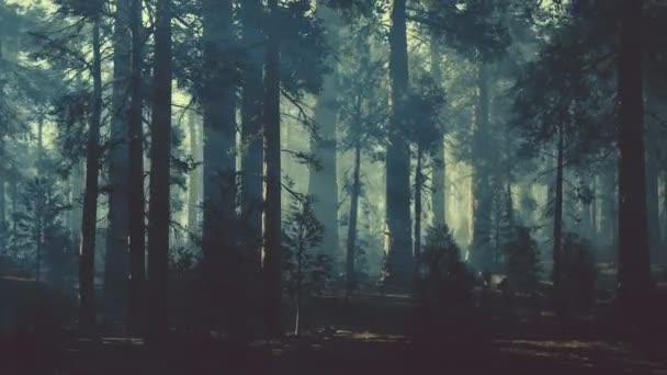 černý kmen stromu v temném borovém lese