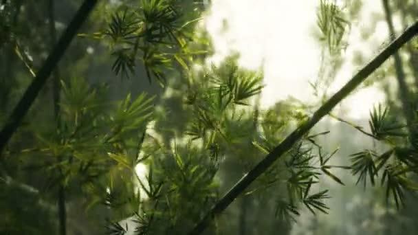 grüner Bambuswald mit Morgensonne