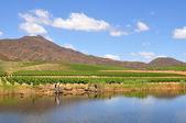Photo Vineyard hills and river