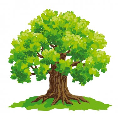 Vector drawing of oak