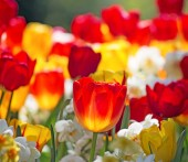 Sommer virág a kertben