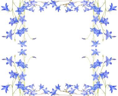 campanula flowers frame