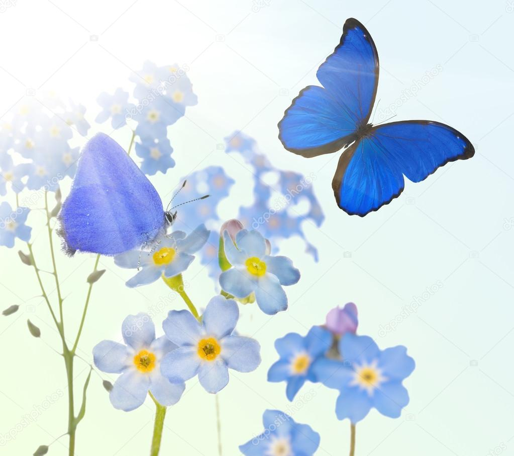 Forget Me Not Flowers And Two Butterflies Stock Photo Drpas