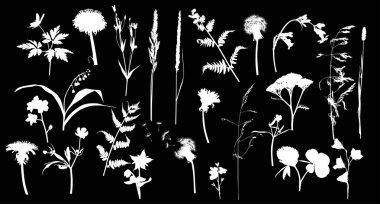 white wild flowers silhouettes